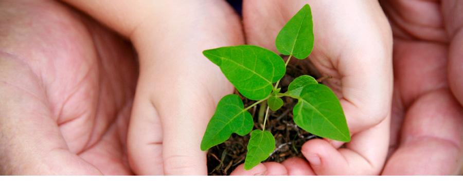Sutentabilidade Ambiental